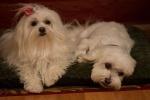 Die drei Hundketiere retten Weihnachten (DVD)