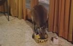 Skippy - Das Buschkänguruh - Staffel 1 (4 DVDs)