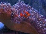 David Attenborough: Great Barrier Reef (2 Blu-rays)