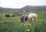 Wunderwelt der Tiere: Island Ponys (DVD)