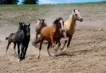 Die schönsten Pferde Abenteuer (3 DVDs)