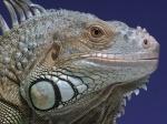 Die Dinosaurier von morgen - Die Herrscher der Echsen (DVD)