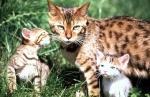 Unser liebstes Haustier - Die KATZE (DVD)